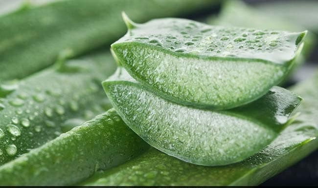 Nourish Yourself With Aloe Vera, the Miracle Plant